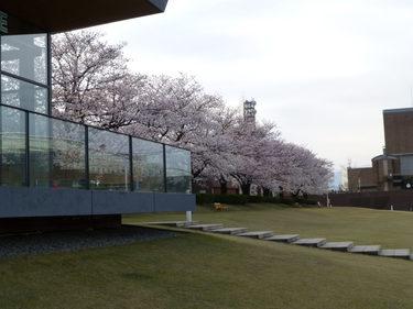 14 富岩運河環水公園の桜